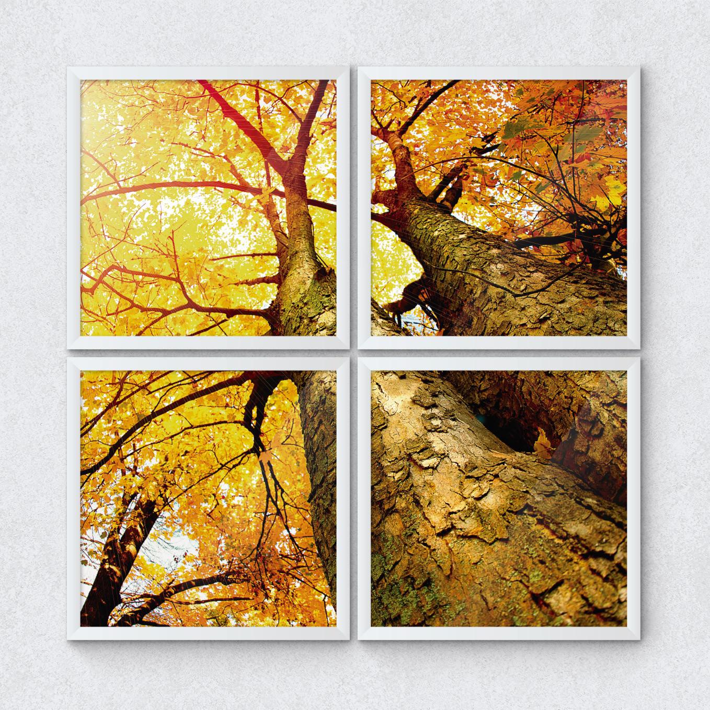 Quadrinhos Decorativos Árvore Outono vista de Baixo Paisagem