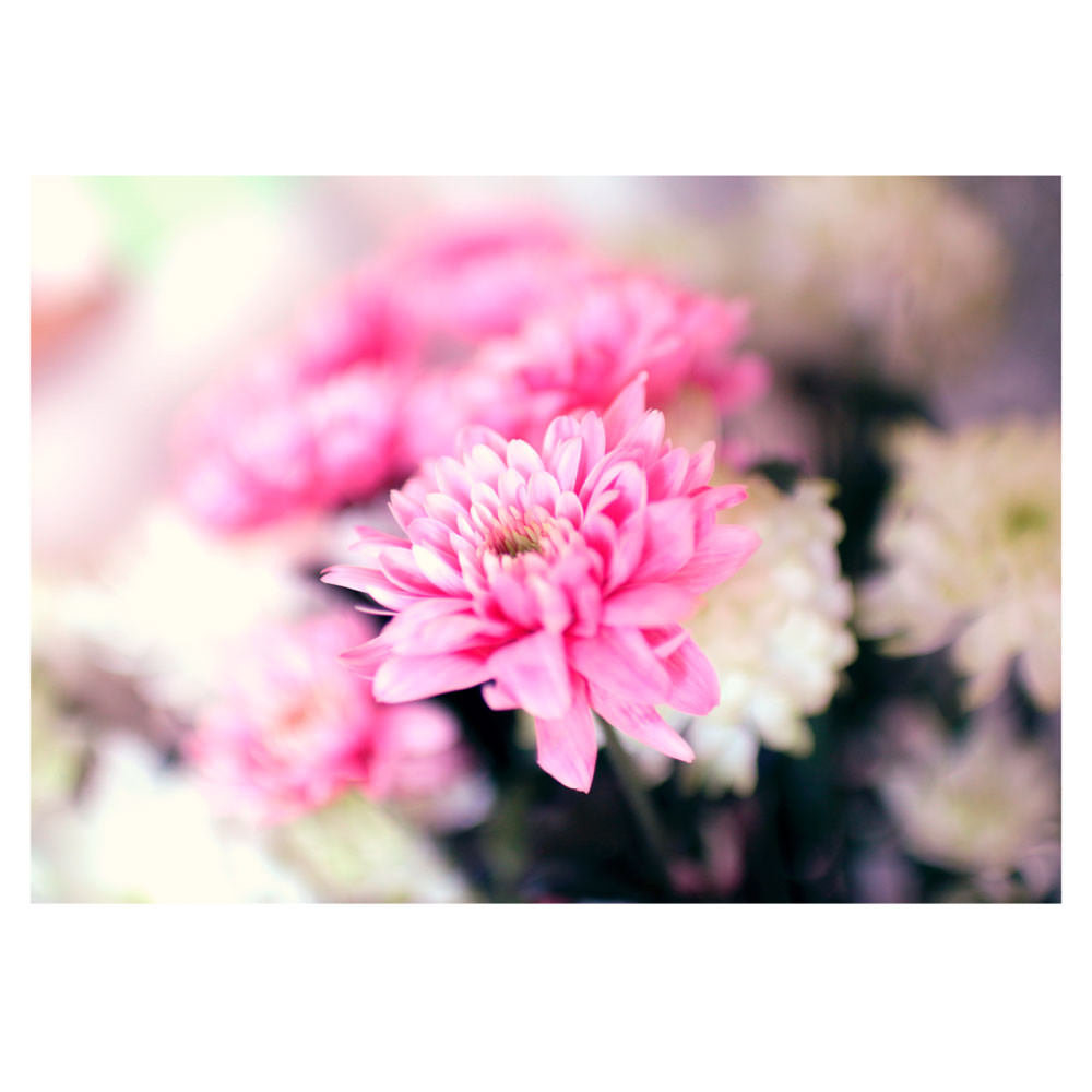 Poster Decorativo a Beleza da Flor