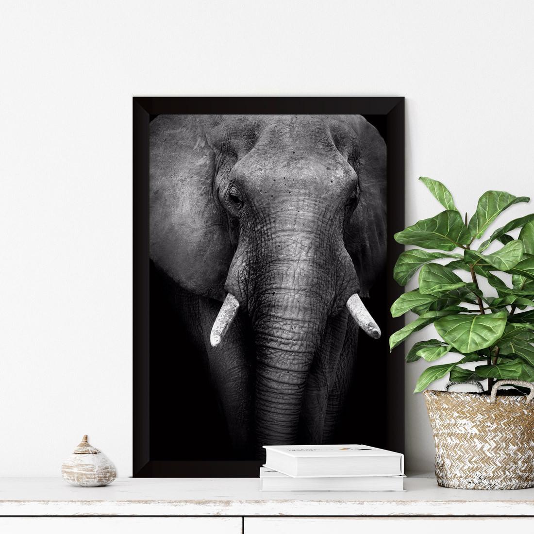 Quadro Decorativo Elefante Fotografia