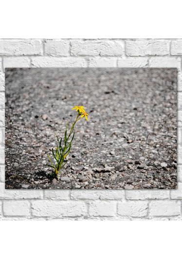 Quadro Decorativo Uma Flor no Cascalho