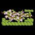 Adesivo de Parede Galhada (Flor Lilás)