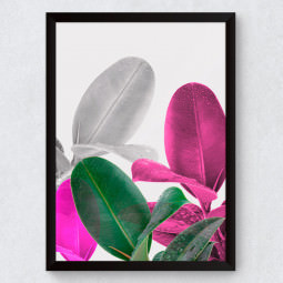 Quadro Decorativo Ficus Coloridos