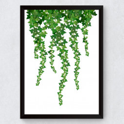 Quadro Decorativo Ivy Planta