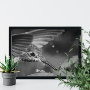 Quadro Decorativo Fotografia Beija Flor Preto e Branco