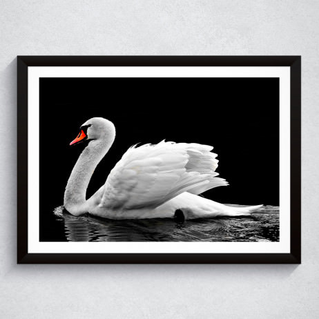 Quadro Decorativo Cisne